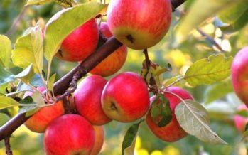 LE FIGARO газеті: Қазақ алмасын құтқару қажет