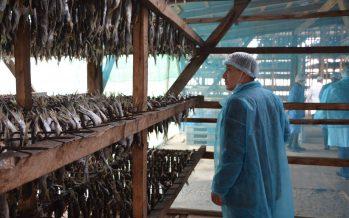 Шардара балығының 70 пайызы шетелге экспортталуда