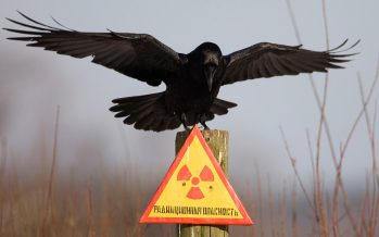 Зачем Казахстану банк  низкообогащенного урана?!