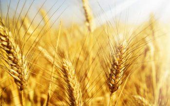 Тілектес ЕСПОЛОВ: Аграрлық саясат – ел экономикасының негізгі бағыты