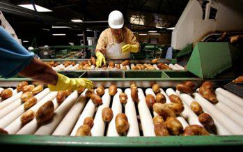 Алматы облысында картоп өңдейтін зауыт салынады